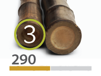 Canas de bambu Black - 3-4-cm-pt-pt - 290-m-pt-pt