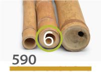 Guadua bamboo poles - 5-7-cm-en - 590-m-en