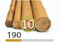 Cañas Bambú Moso - 9-11-cm - 190-m