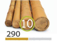 Cañas Bambú Moso - 9-11-cm - 290-m