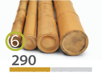 Cañas Bambú Moso - 5-7-cm - 290-m