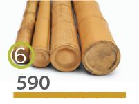 Cañas Bambú Moso - 5-7-cm - 590-m