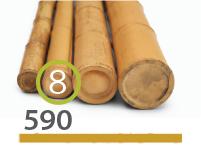 Cañas Bambú Moso - 7-9-cm - 590-m
