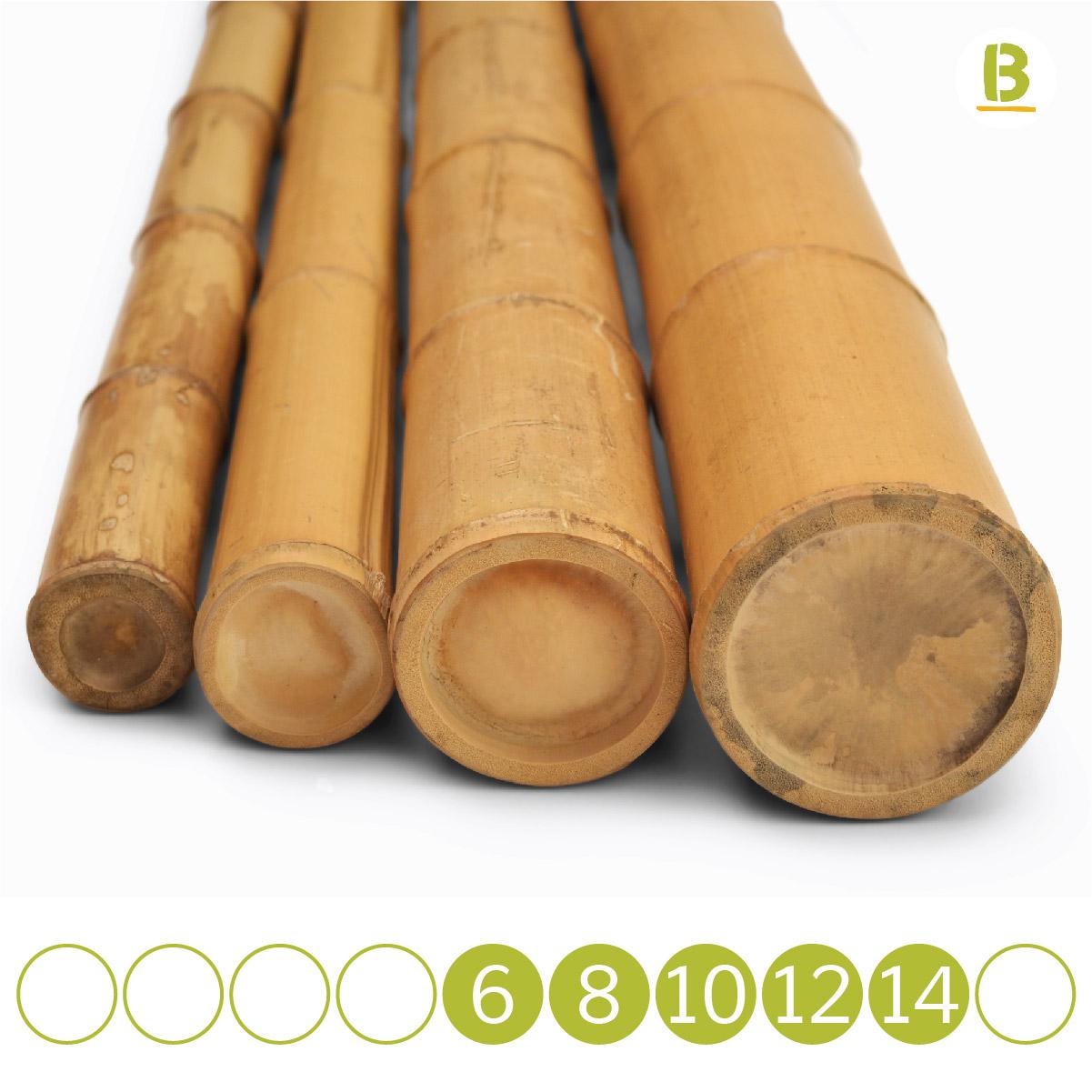 Cañas De Bambú Y Derivados Al Mejor Precio Bambusa Shop