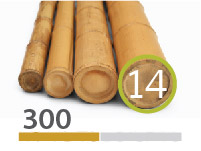 Cañas Bambú Moso - 13-15-cm - 290-m