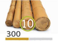 Canas Bambu Moso - 9-11-cm-pt-pt - 300m-pt-pt