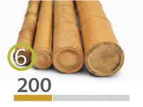 Cañas Bambú Moso - 5-7-cm - 2m