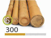 Cañas Bambú Moso - 5-7-cm - 300m